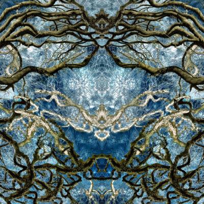 S.Sensoy Bäume-Rorschach II