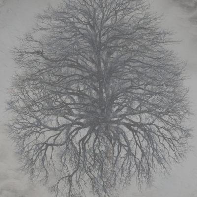 Suat Sensoy Baum - Landschaft II