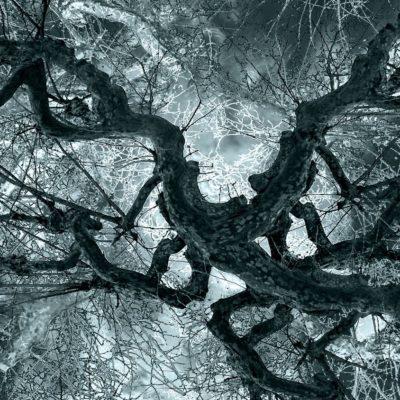 Suat Sensoy Bäume-Artefakte Vb