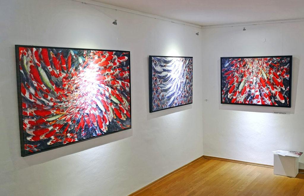 Paintings: Koi VI, Koi III, Koi IV (c) Suat Sensoy